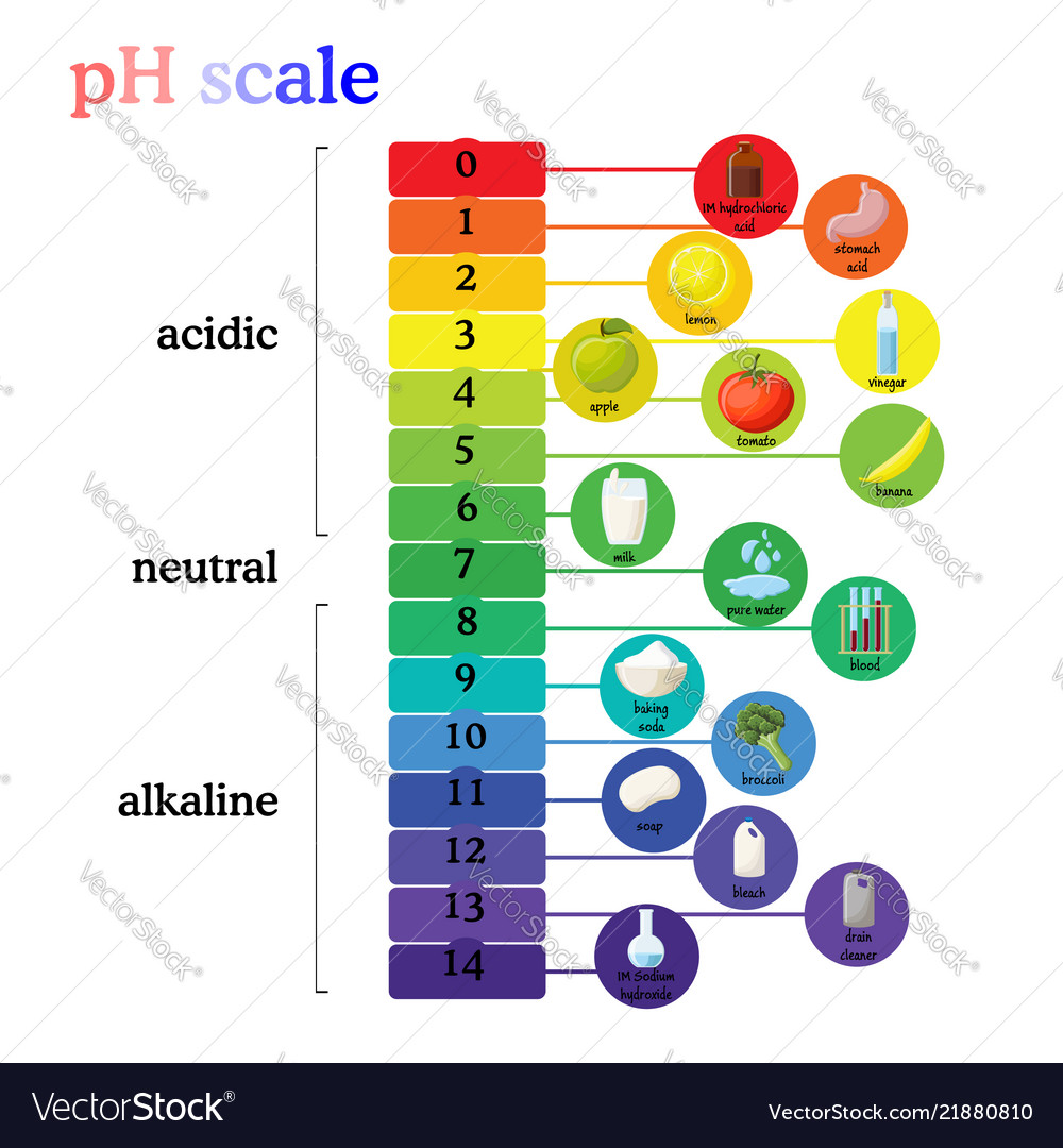 ph scale diagram with corresponding acidic or vector image Acid Dissociation Constant