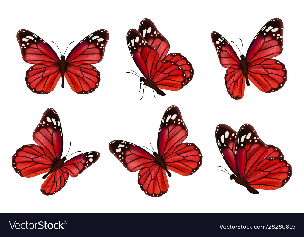 Butterflies realistic colored insects beautiful