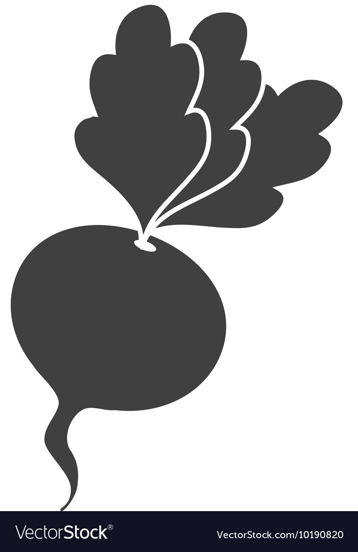 Beet beetroot vegetable icon graphic