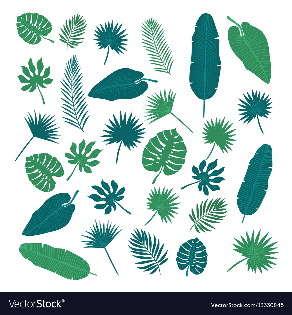 Collection of tropical leaves nature elements for