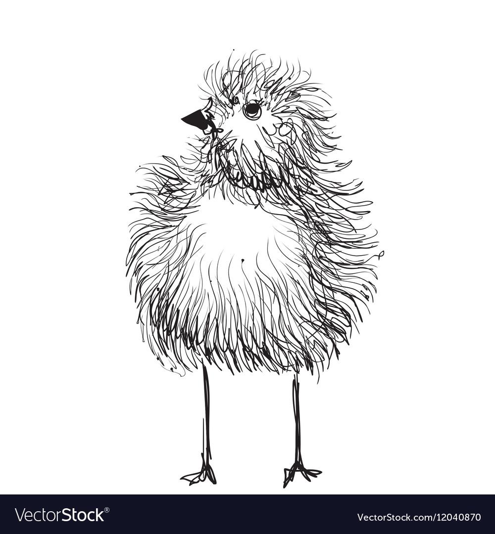 Chicken Pencil Drawing