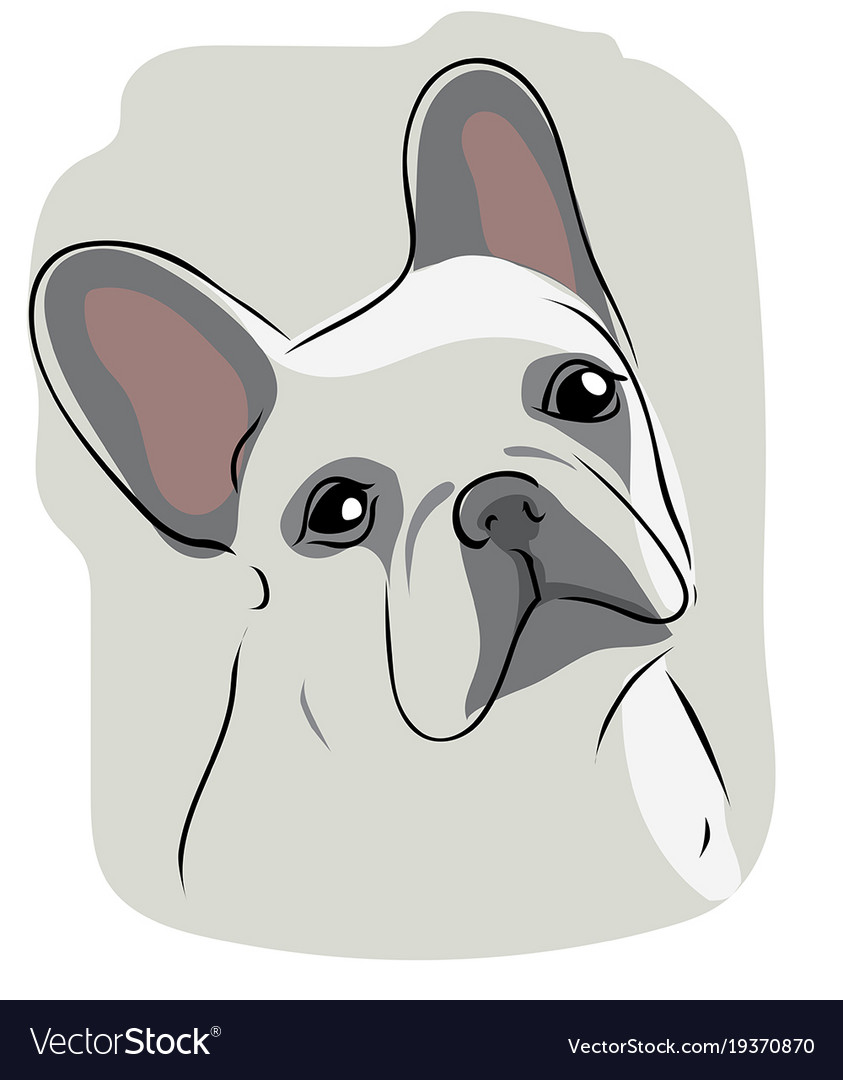 Head of french bulldog vector image