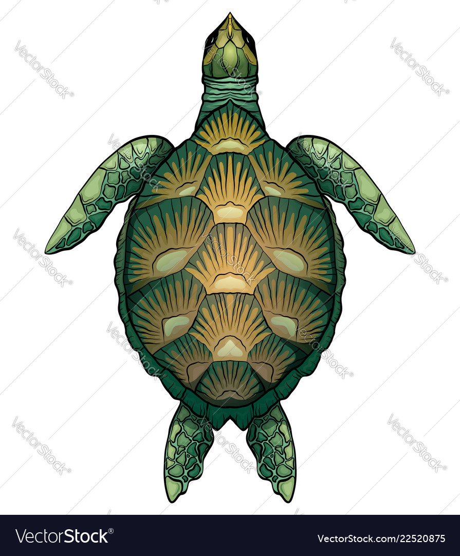 - Color Cartoon Of Green Turtle The Royalty Free Vector Image
