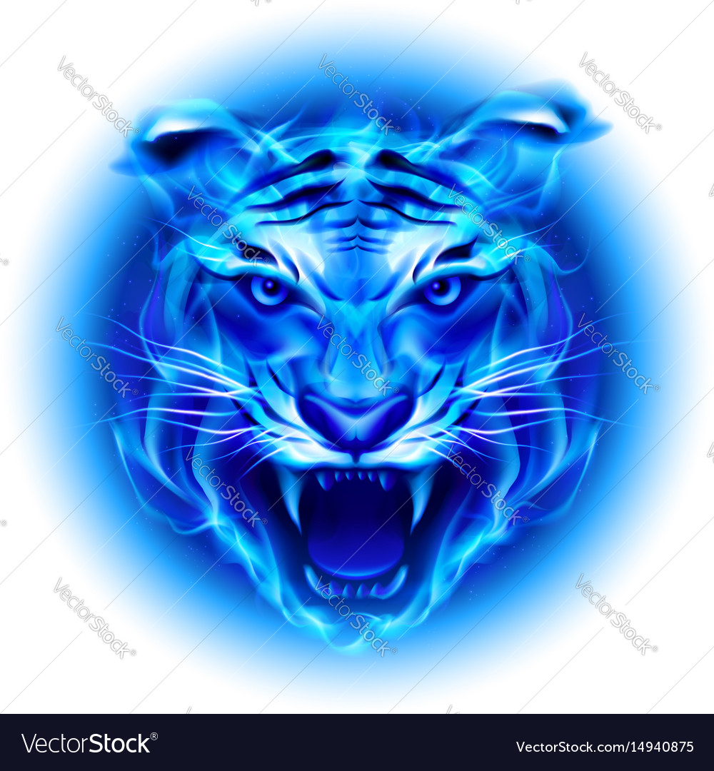 head of fire tiger in blue on white background vector image