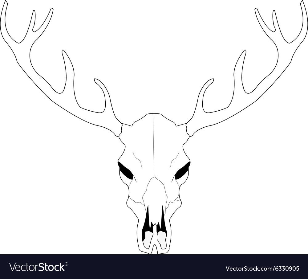 deer skull line art royalty free vector image vectorstock