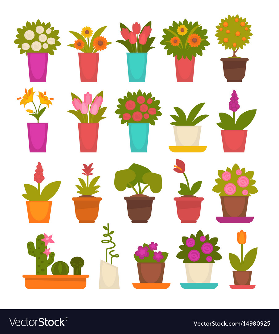 Assortment of different flowers