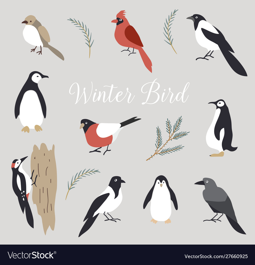 Elements set cute winter birds isolated