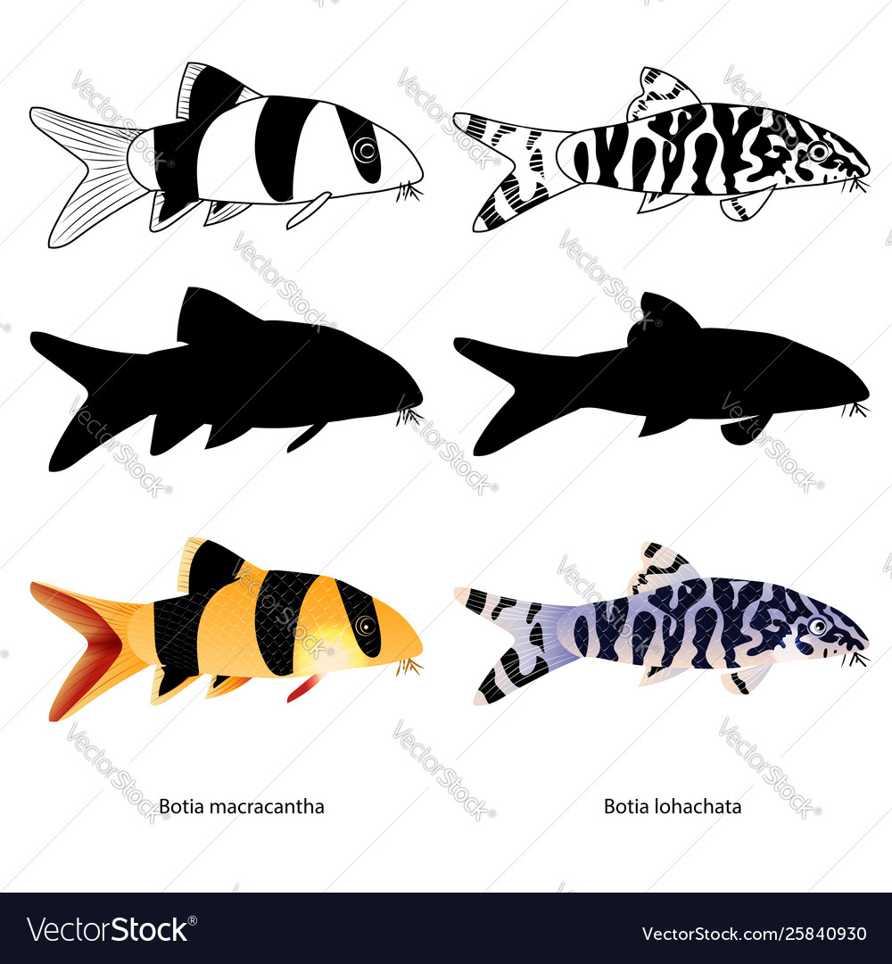 Set aquarium fish isolated on white popular