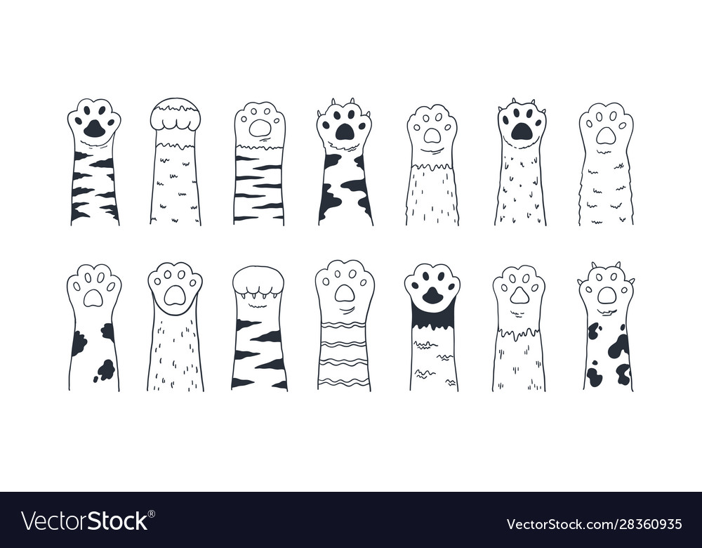 Cat paws cute hand drawn dog or kitten claws and