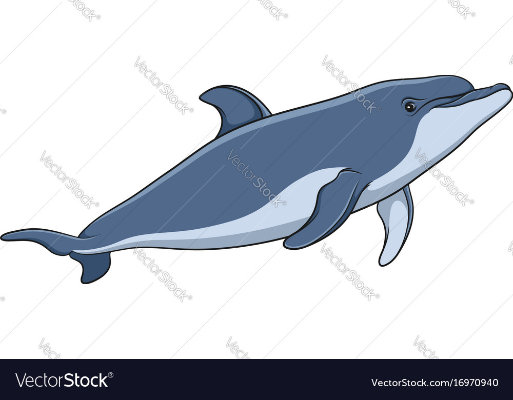 Color image of a dolphin vector image