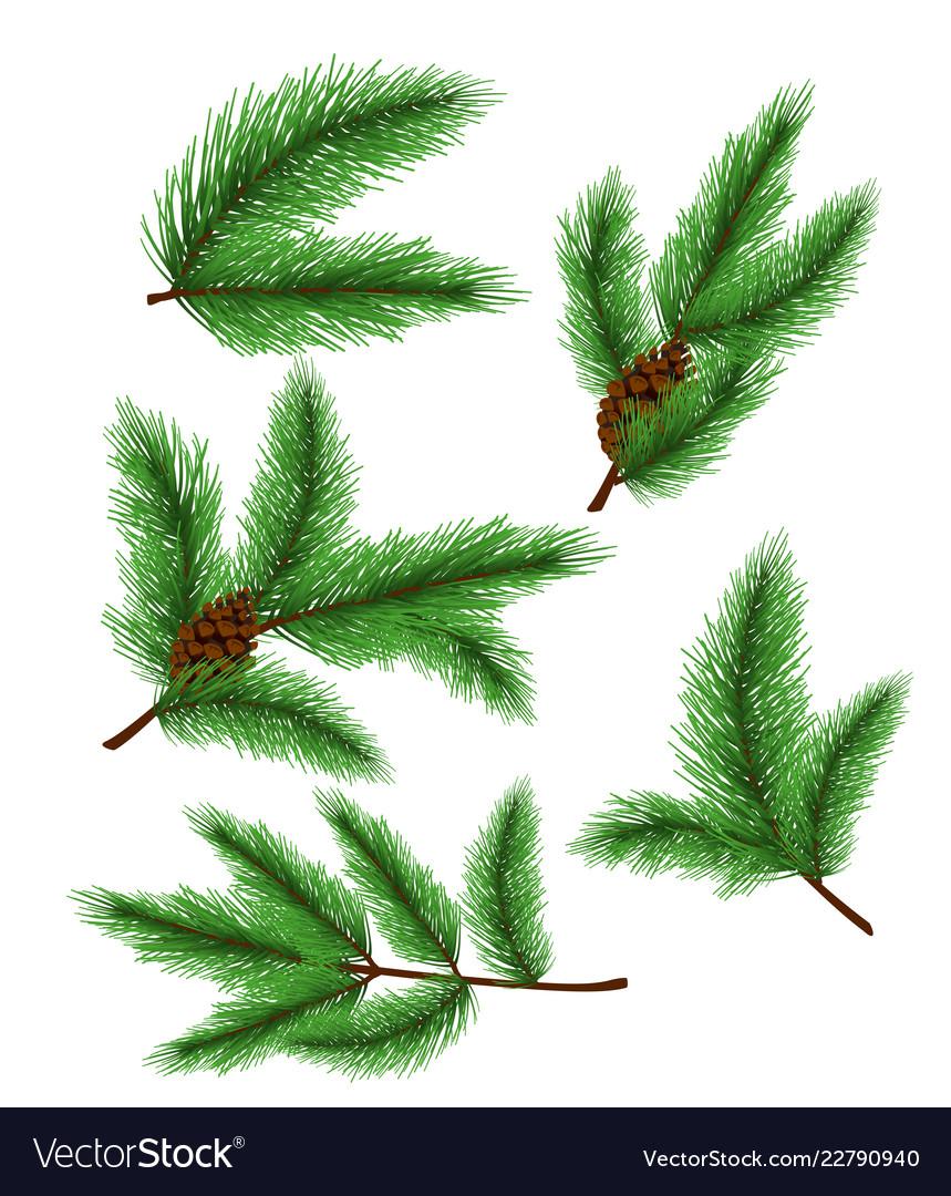 Fir branches set of