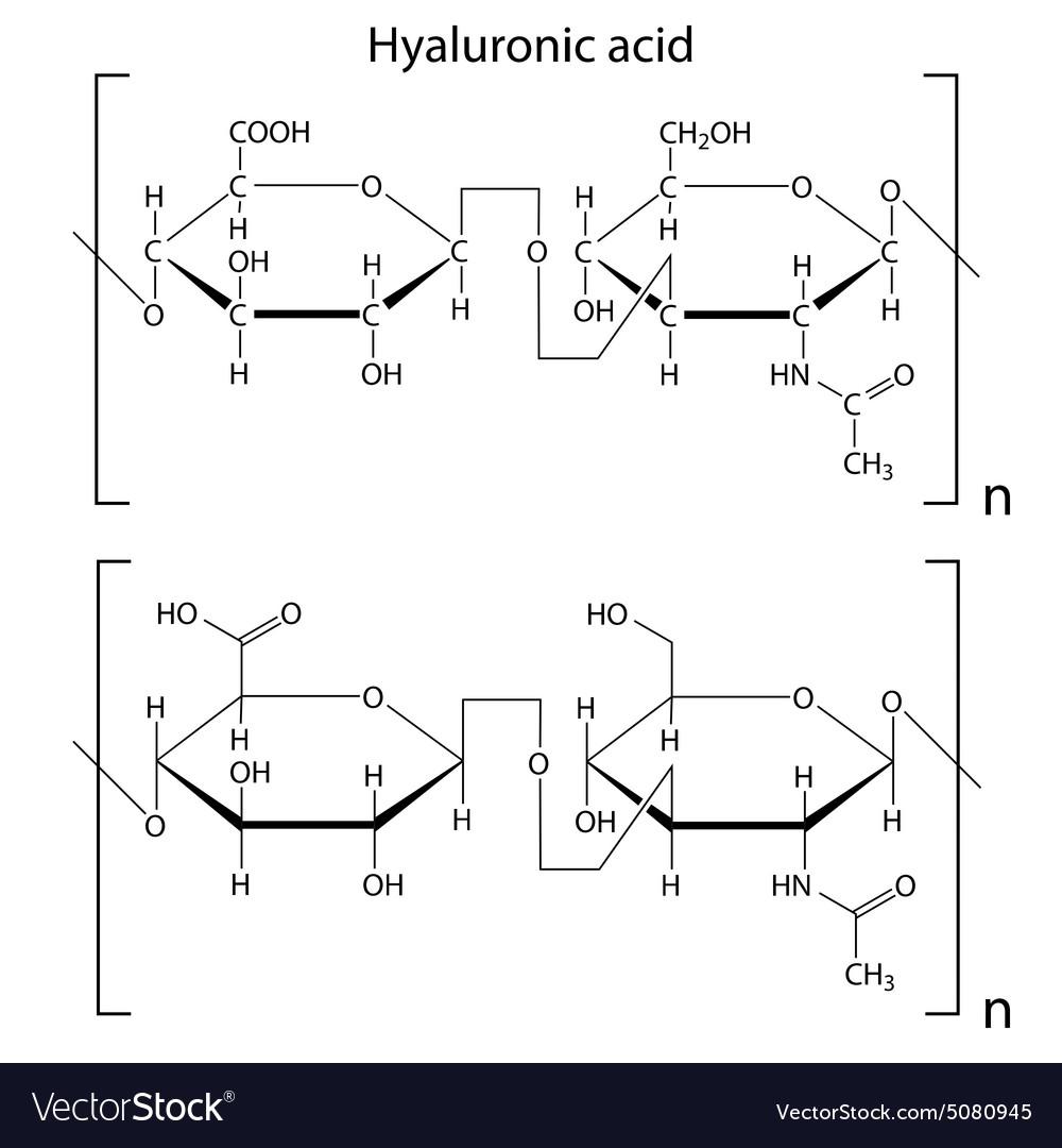 hyaluronic acid vector image