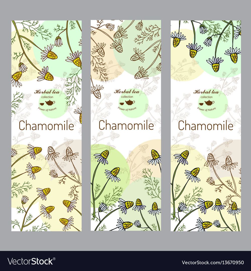 Herbal tea collection chamomile