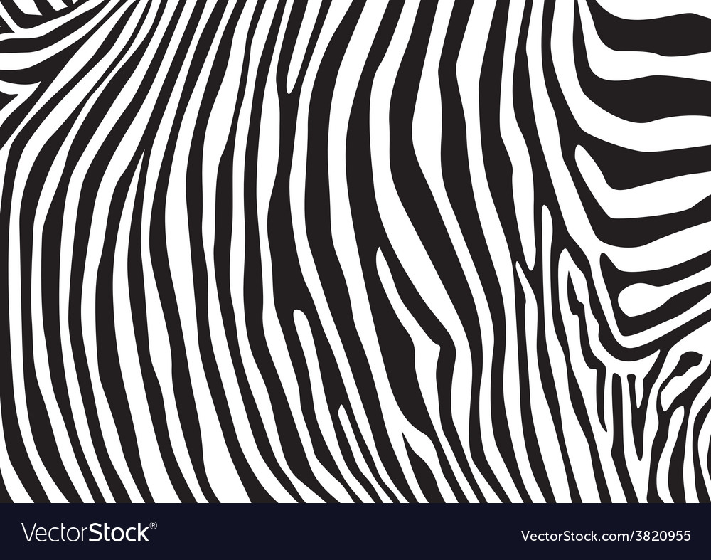 Zebra Pattern Interesting Decorating Design