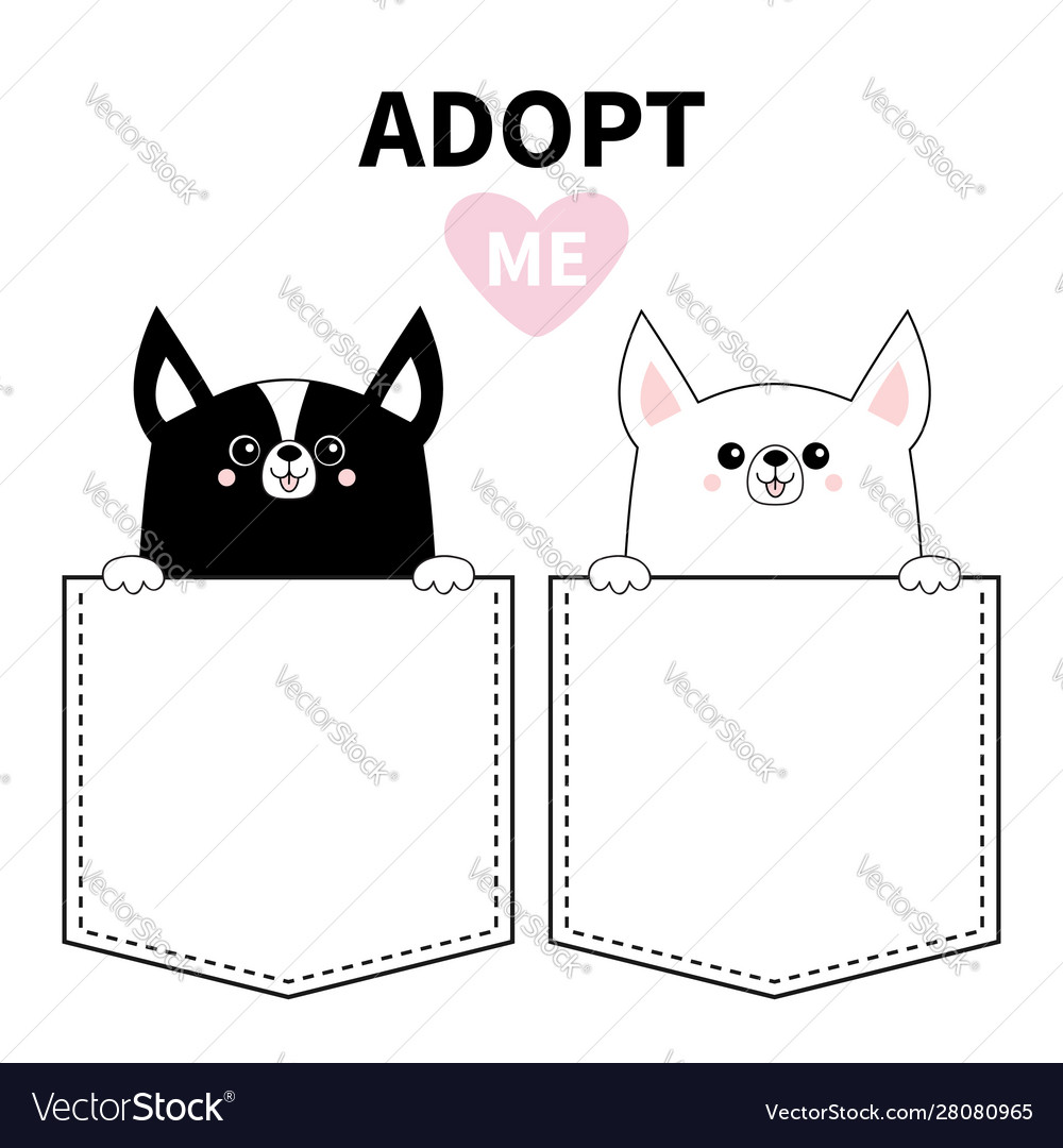 Adopt me chihuahua dog set in pocket holding