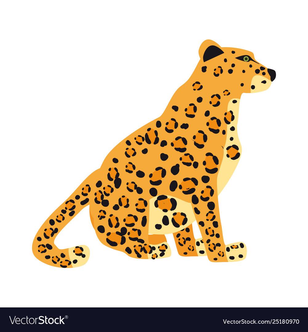 Leopard cute trend style animal predator mammal
