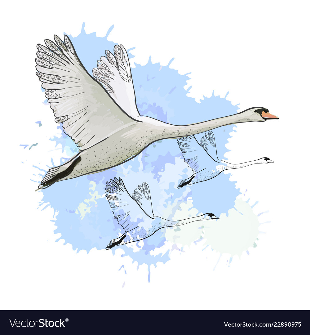 Aninimal Book: Drawing flying flock swans with Royalty Free Vector Image