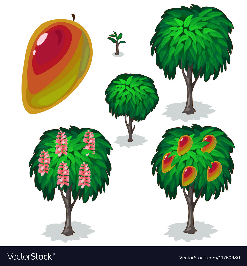 Planting and cultivation of tree pear vector image
