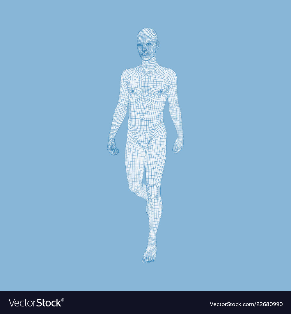 Walking Man 3d Human Body Model Human Body Wire Vector Image