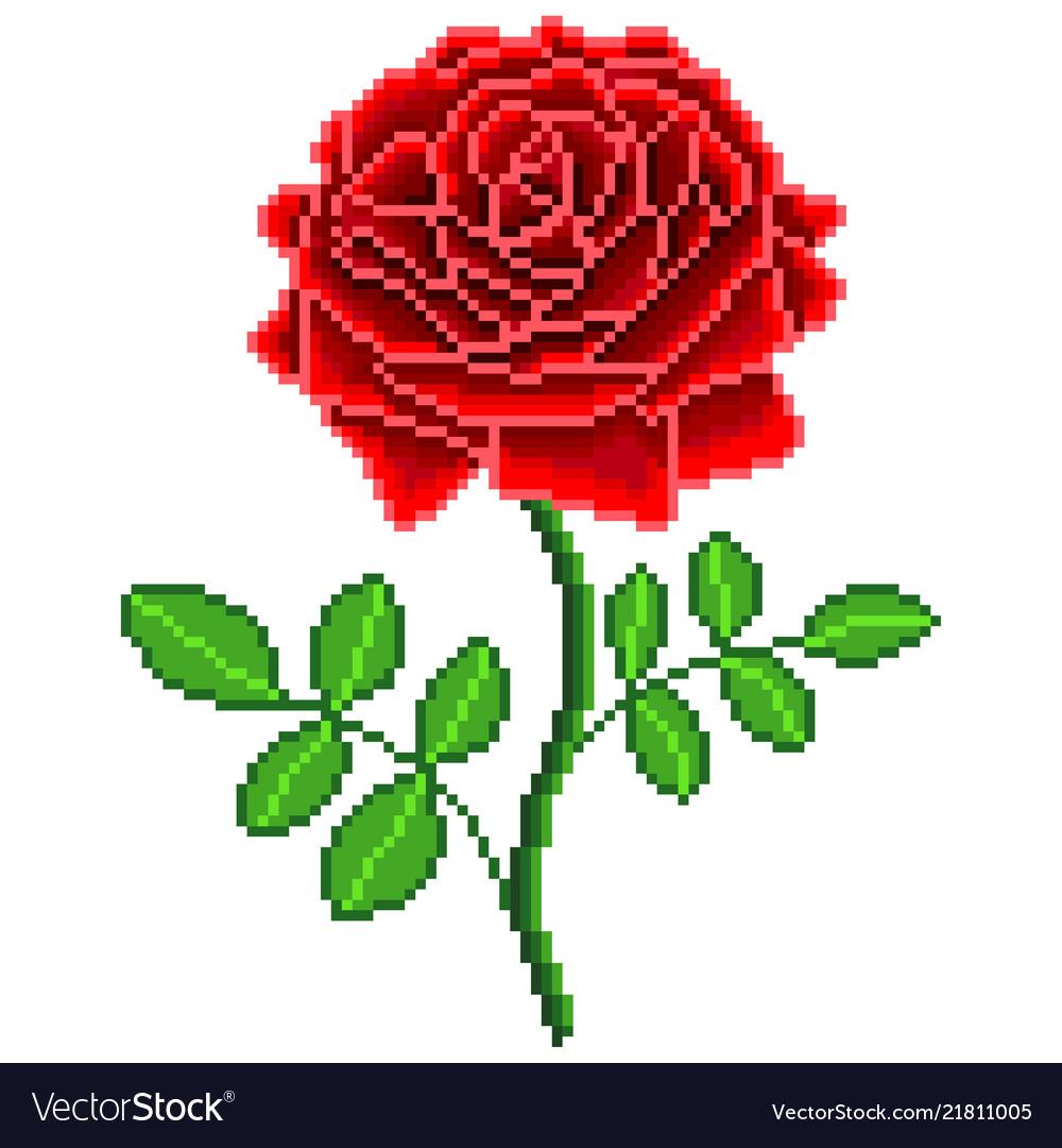 Rose Flower Image Download