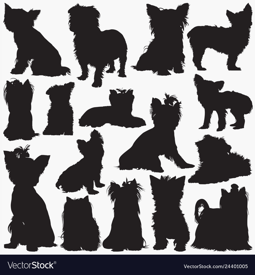 Silhouettes Yorkshire Terrier Dog Royalty Free Vector Image