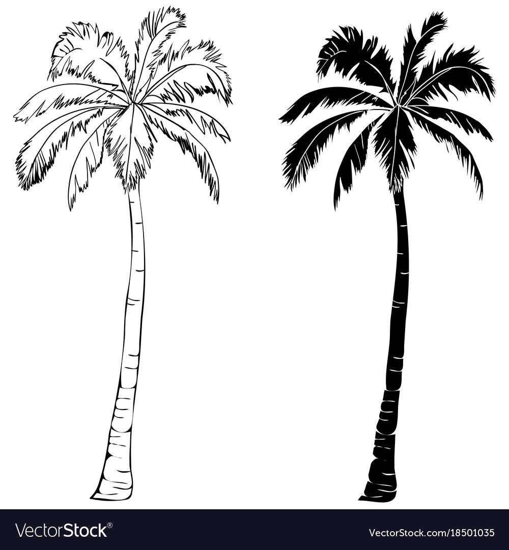 black single palm tree silhouette icon isolated vector image rh vectorstock com Palm Tree Silhouette SVG palm tree silhouette vector free download
