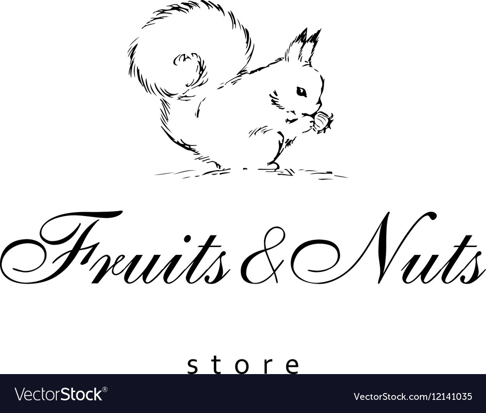 Hand drawn squirrel on a white background