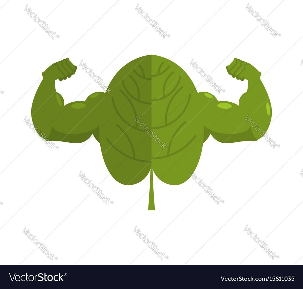 Strong spinach powerful herbs for muscle growth vector image