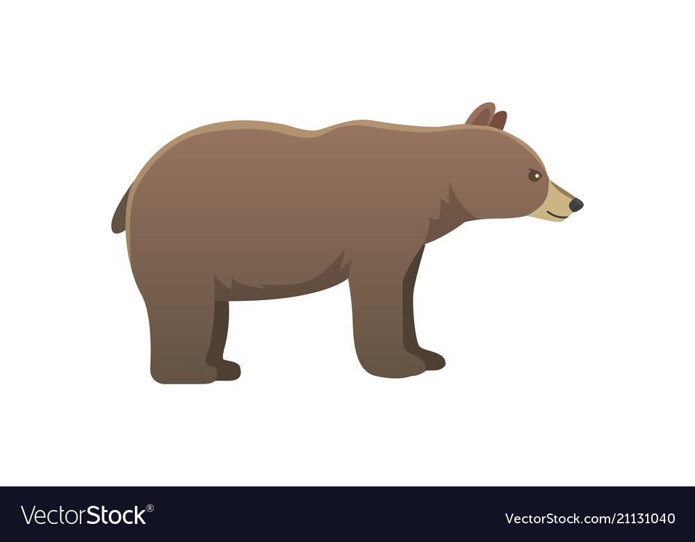 Broun american bear isoalted