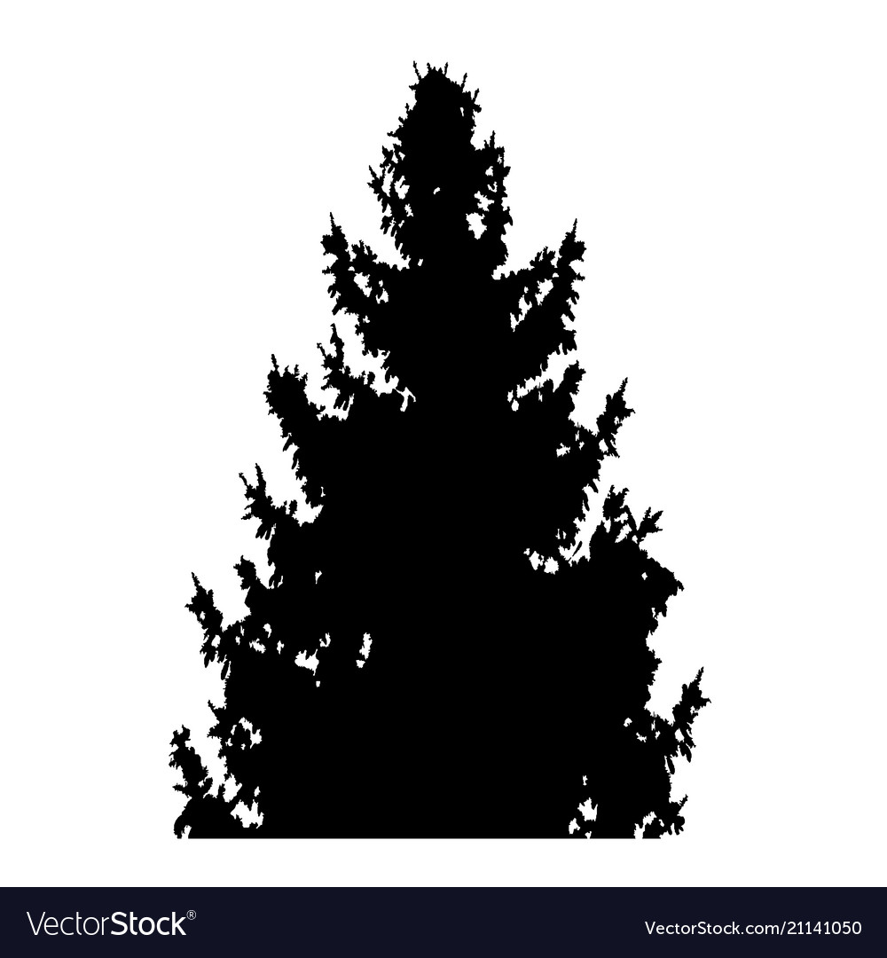 Fir-tree with cones silhouette isolated on white