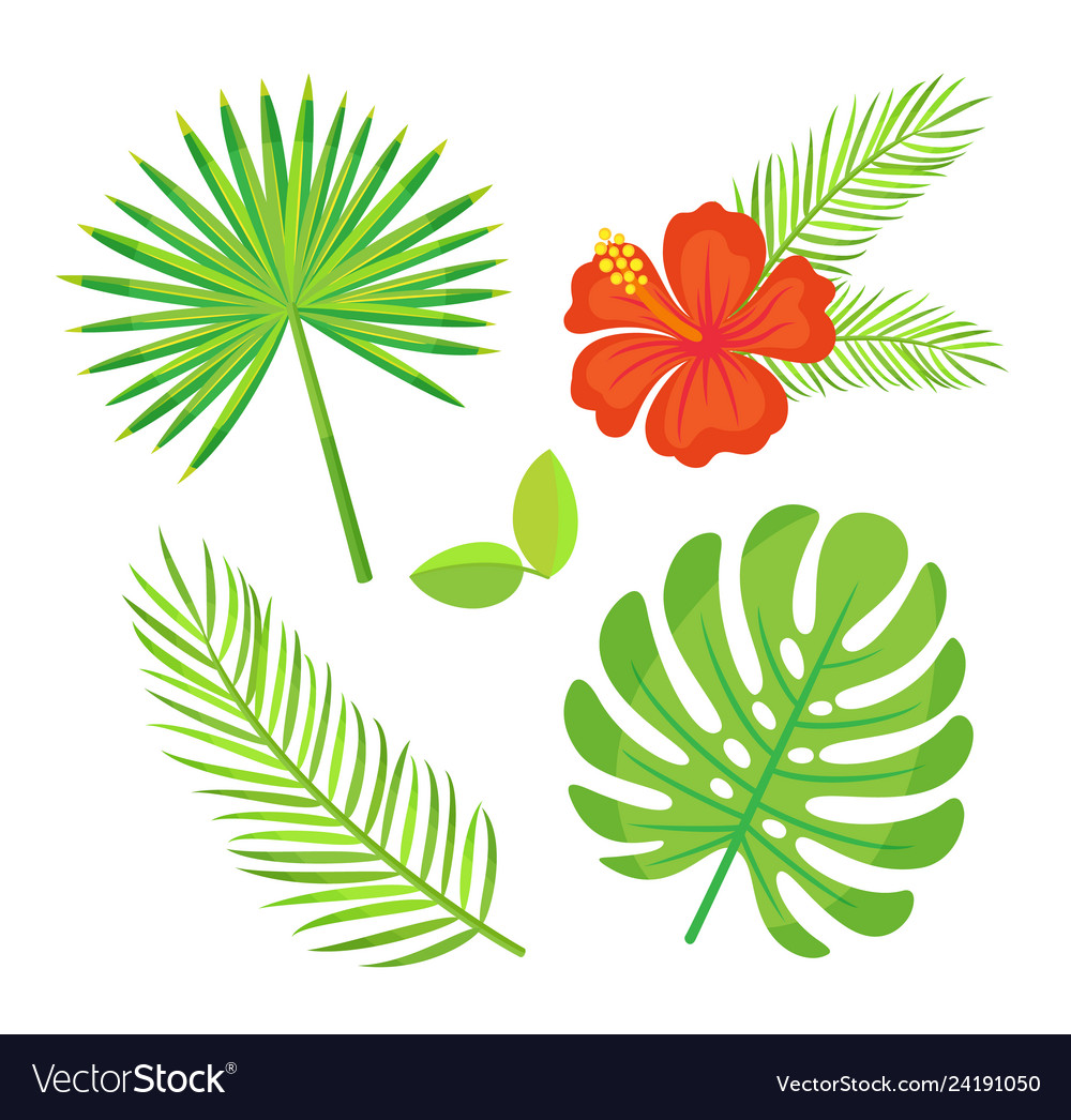Floral decoration tropical leaves and foliage