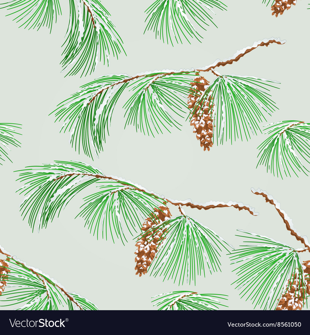 Seamless texture branch pine and snow