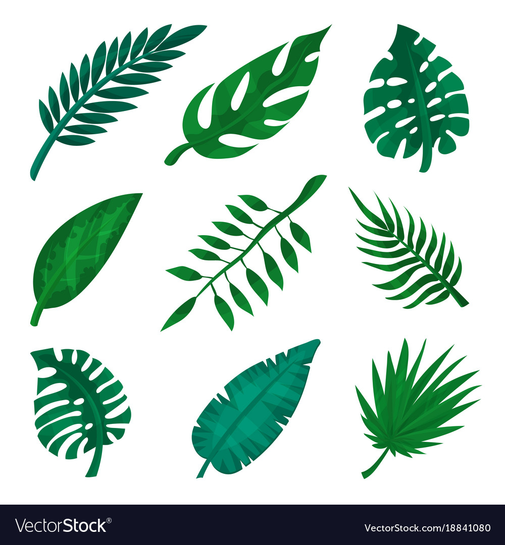 green tropical leaf set palm leaves royalty free vector