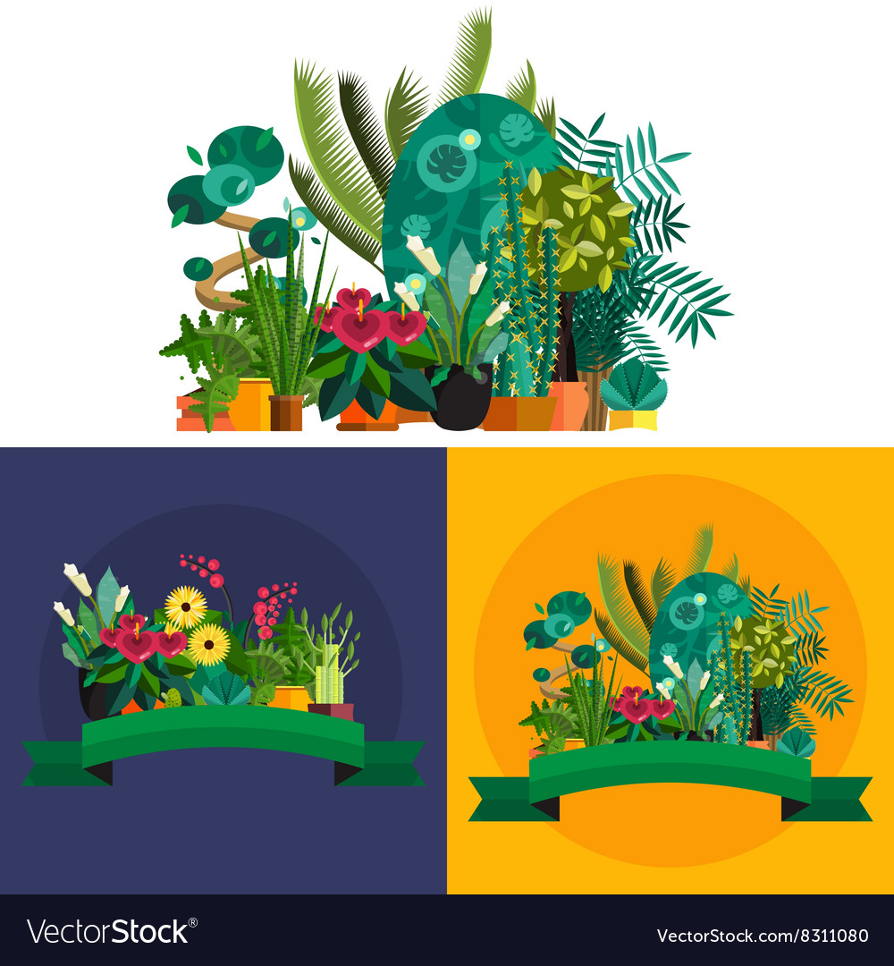 Indoor home office plants royalty Houseplants Indoor Houseplants Indoor And Office Vector Image Vectorstock Houseplants Indoor And Office Royalty Free Vector Image
