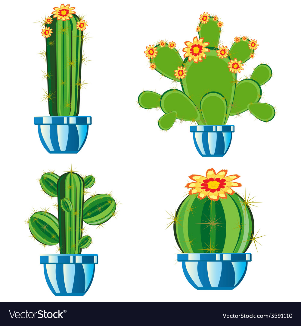 Cactuses in pot vector image