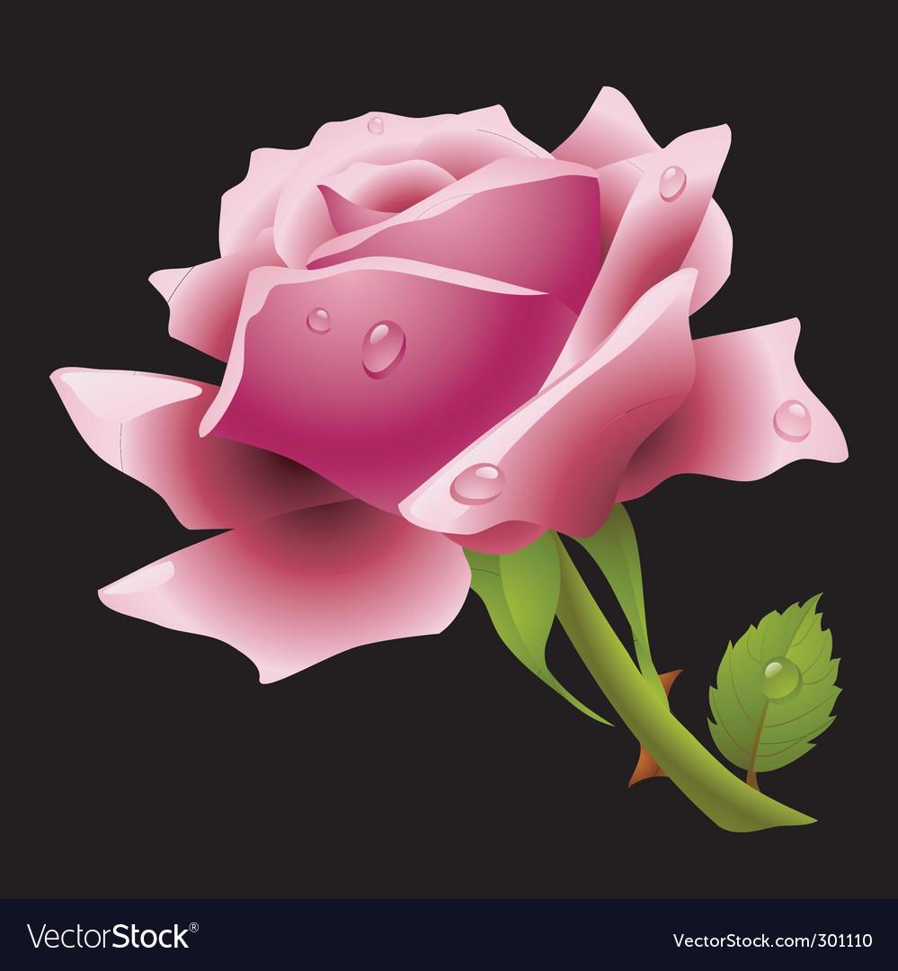 Pink rose Royalty Free Vector Image - VectorStock