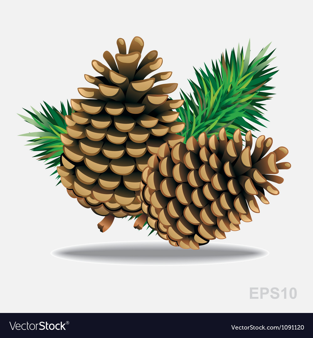 Pine cones with pine needles vector image