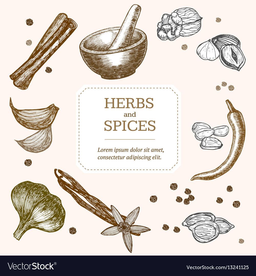 Spices banner card hand draw sketch