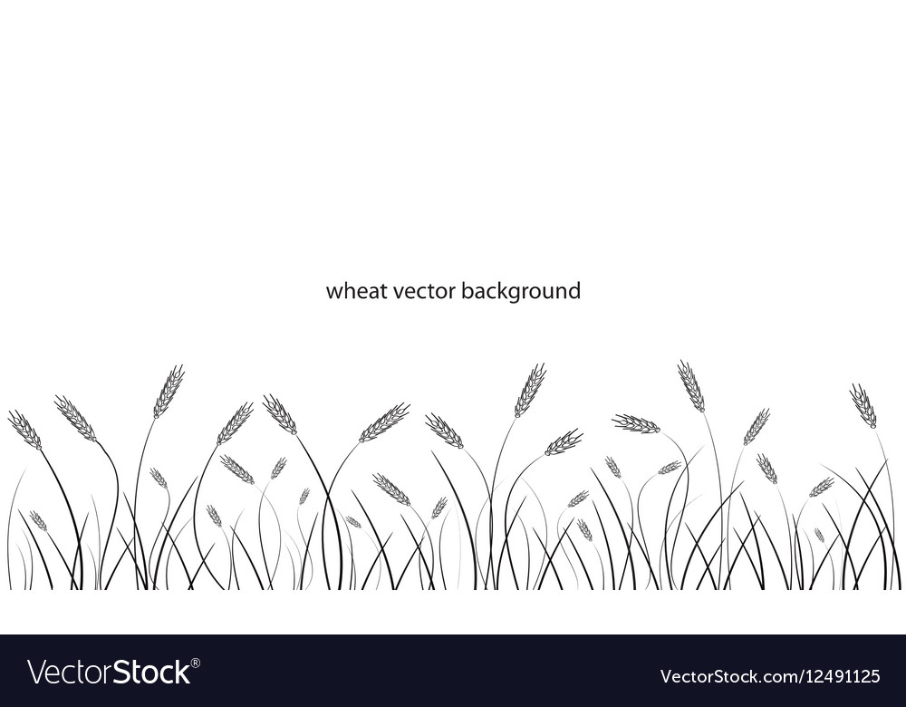 Wheat field line border isolated on white