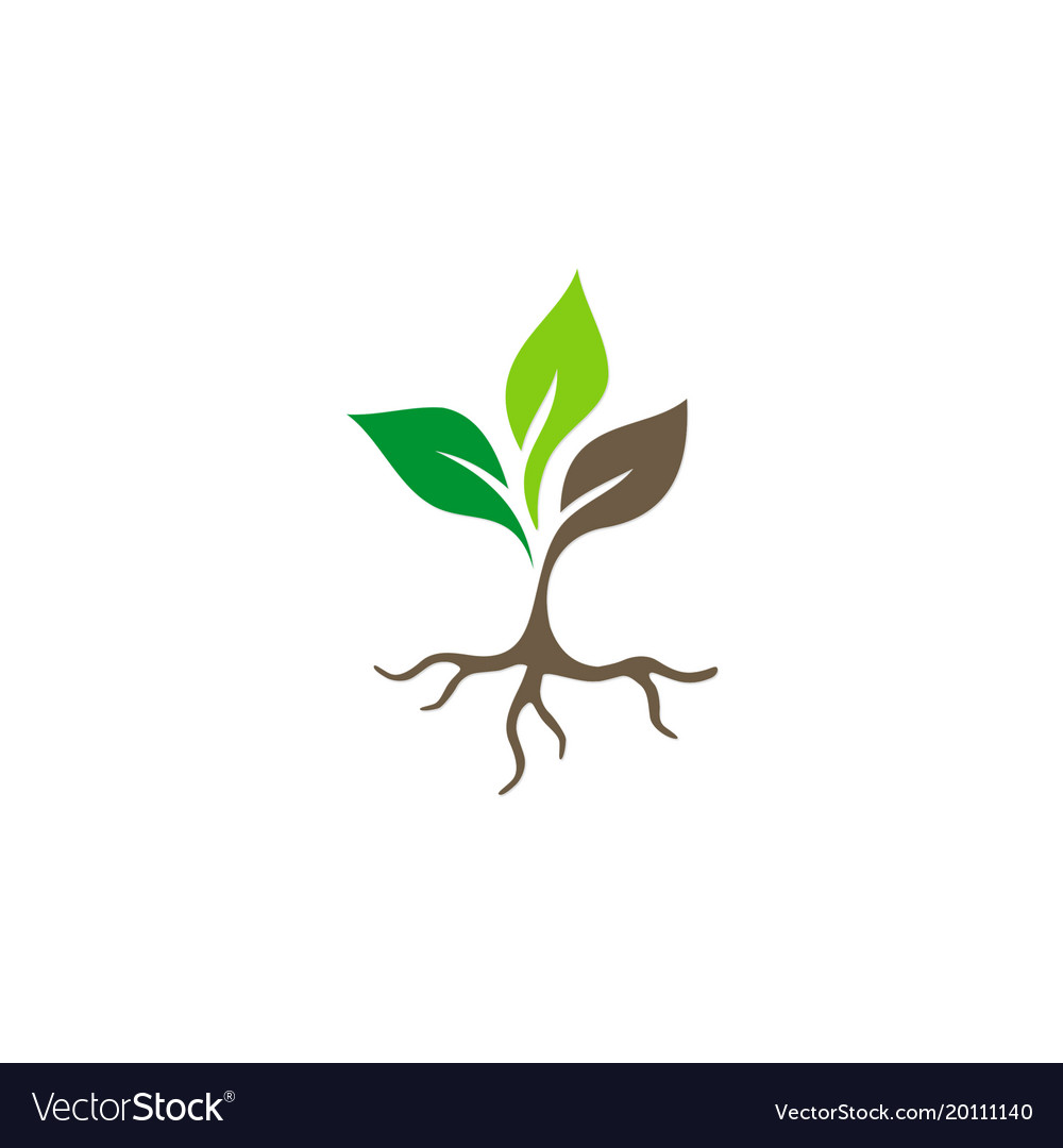 seed plant root logo royalty free vector image rh vectorstock com plant vector png plant vector dynamics
