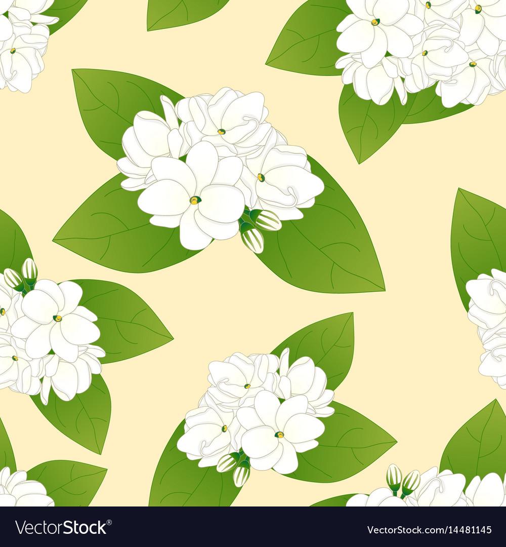 Arabian Jasmine On Yellow Ivory Background Vector Image