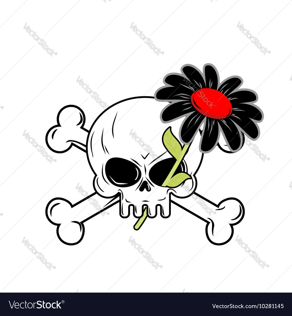 Flower Of Death And Skull Black Daisy Flower Grows