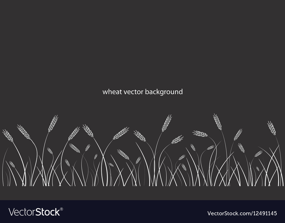Wheat field line border on black background
