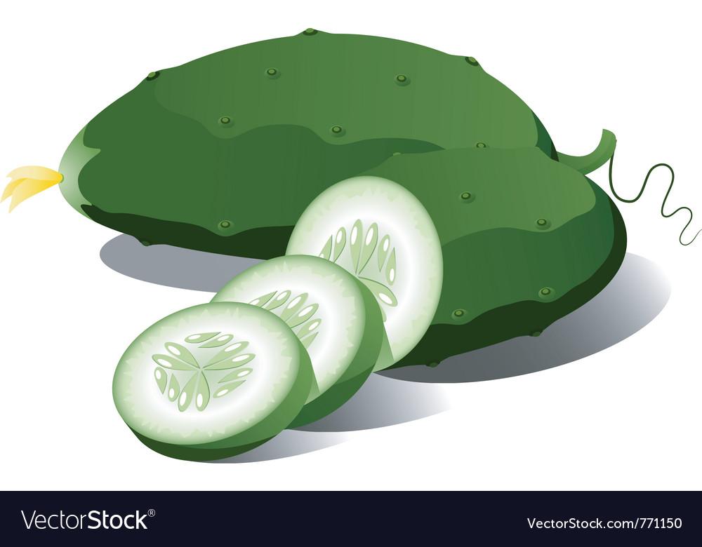 Cucumber vector image