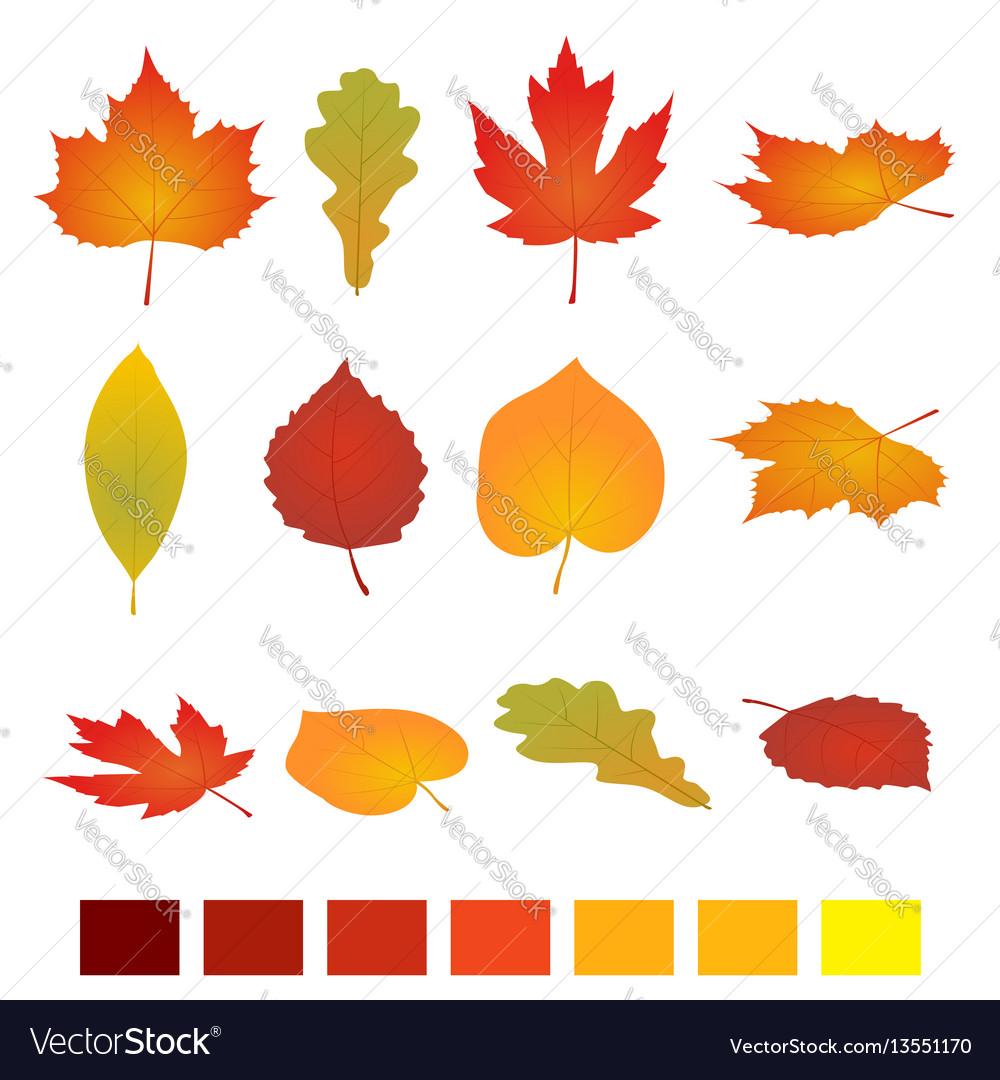 Isolated autumn leaves flat