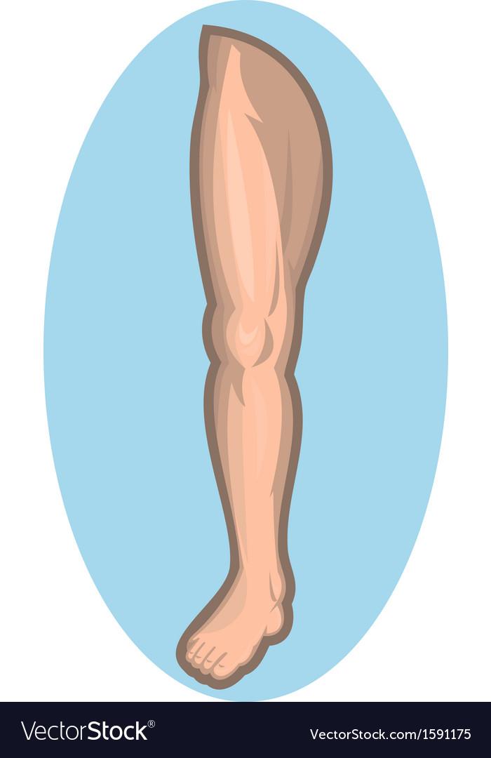 Human Thigh Vector