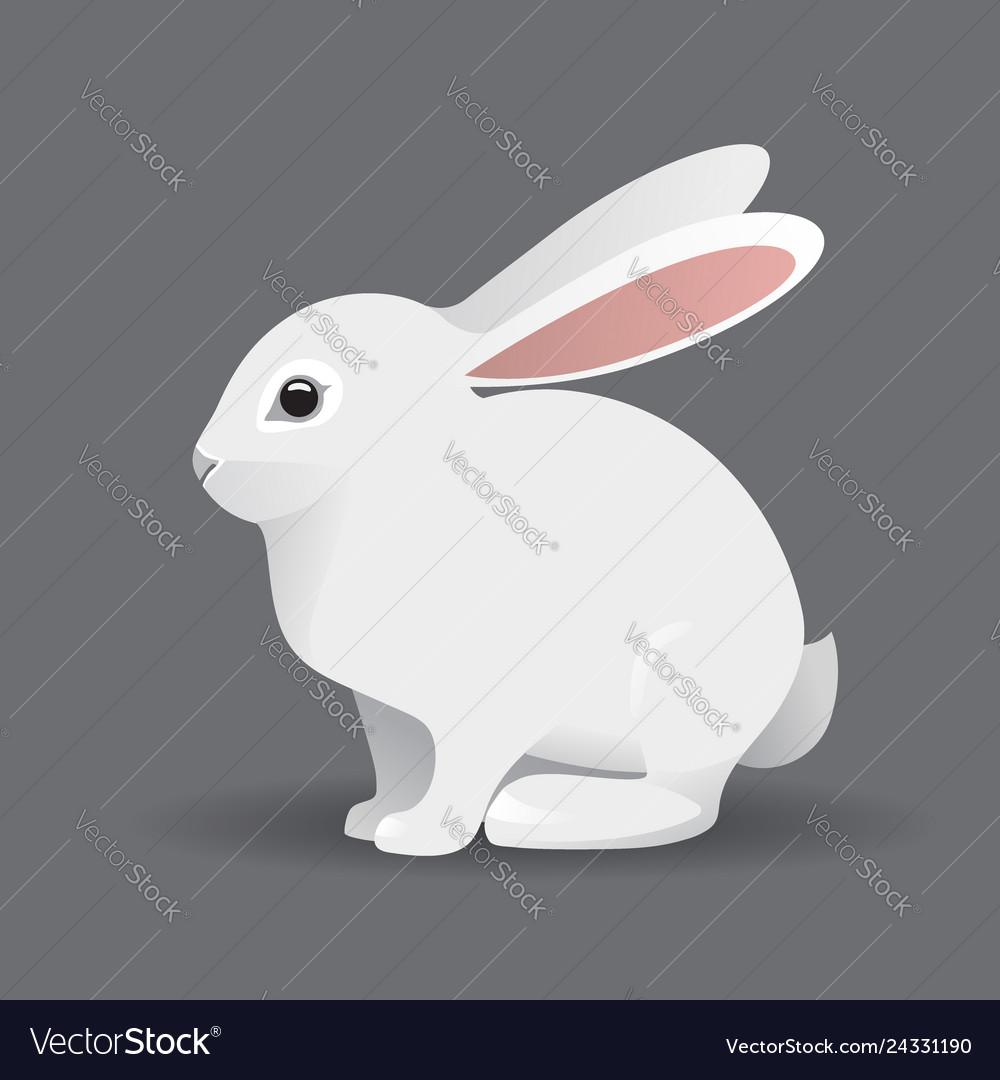 Cute white bunny rabbit cartoon