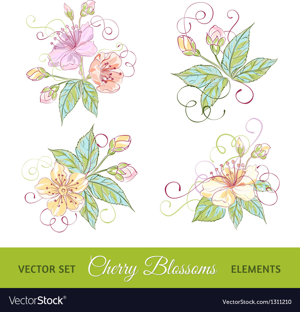 Set of cherry flowers vector image