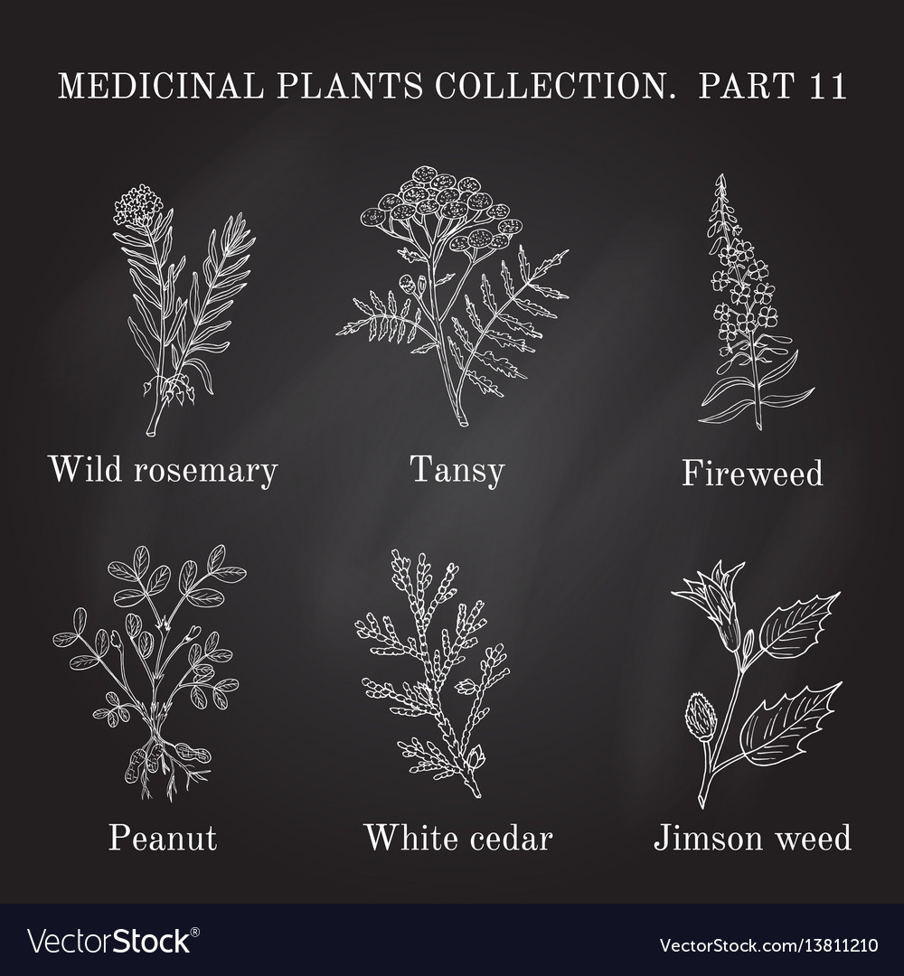 Vintage collection of hand drawn medical herbs and