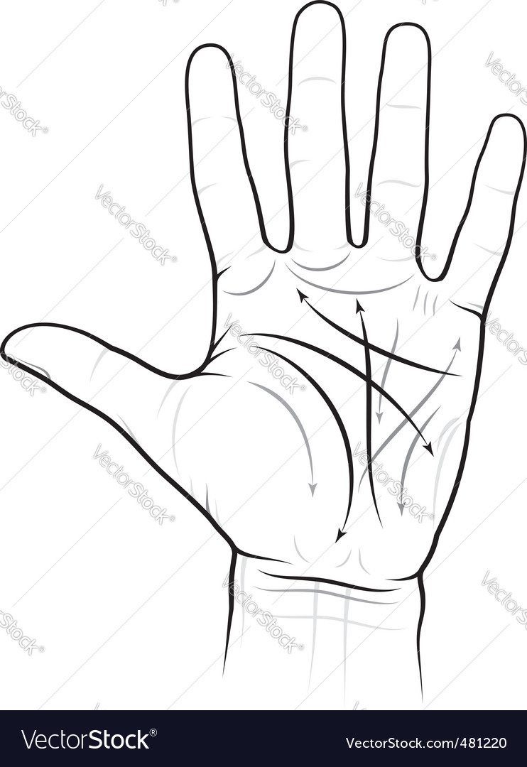 Chiromancy chart of a palm vector image
